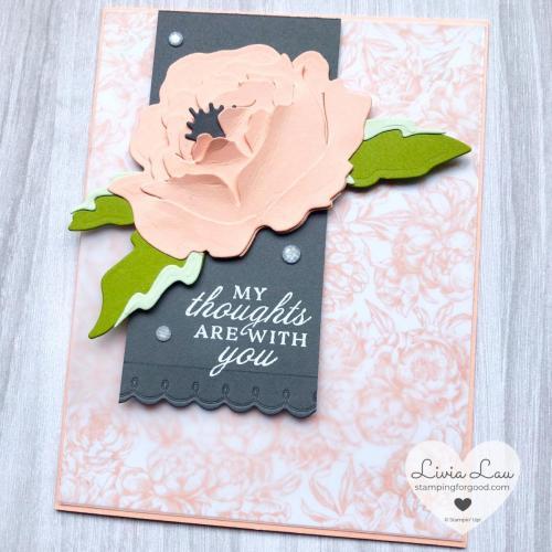 Prized Peony Large Petal Pink Flower